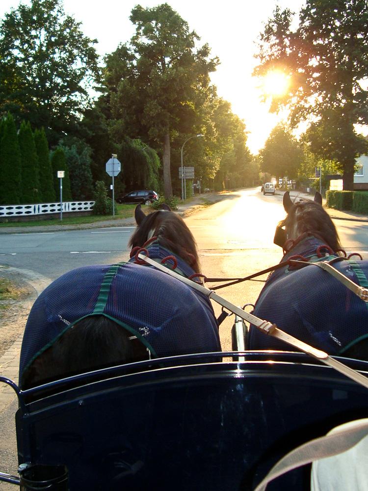 Zwei sympathische Pferdestärken