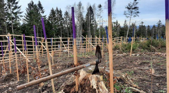 Nachtrag: Bäume-Pflanzen und neue Mitglieder
